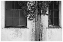 Old windows and tree, La Paz, Cesar Chavez National Monument, Keene. California, USA ( black and white)