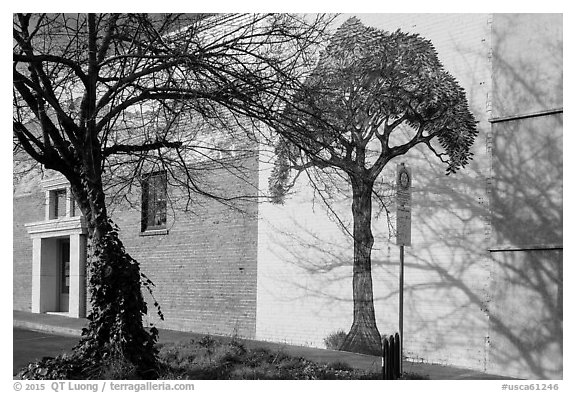 Tree and mural, Willits. Sonoma Valley, California, USA (black and white)