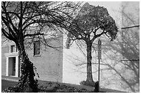 Tree and mural, Willits. Sonoma Valley, California, USA ( black and white)
