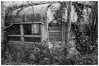 Overgrown trailer, Klamath. California, USA ( black and white)
