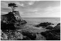 Lone Cypress, and cove, late afternoon. Pebble Beach, California, USA ( black and white)