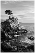 Lone Cypress. Pebble Beach, California, USA ( black and white)