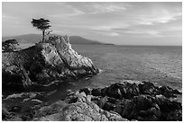 Salt-pruned Monterey cypress (macrocarpa) tree. Pebble Beach, California, USA ( black and white)