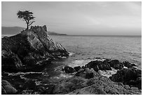 Lone Cypress tree at sunset. Pebble Beach, California, USA ( black and white)