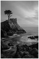 Lone Cypress and cloud painted by sunset. Pebble Beach, California, USA ( black and white)