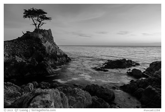 Lone Cypress clinging to its wave-lashed granite pedestal. Pebble Beach, California, USA (black and white)