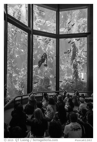 Tourists watch scuba diver feed fish in kelp forest tank. Monterey, California, USA (black and white)