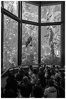Tourists watch scuba diver feed fish in kelp forest tank. Monterey, California, USA ( black and white)