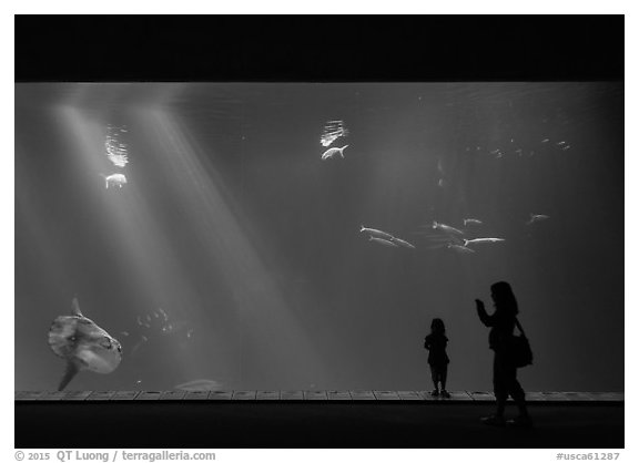 Mother and girl in front of huge fish tank, Monterey Bay Aquarium. Monterey, California, USA (black and white)