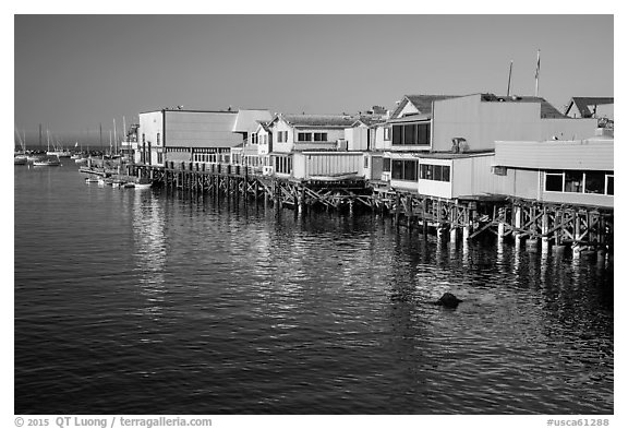 Wharf. Monterey, California, USA (black and white)