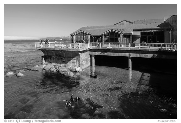 Observation deck and scuba divers, Monterey Bay Aquarium. Monterey, California, USA (black and white)