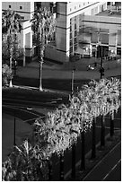 Palm trees, and street from above. San Jose, California, USA ( black and white)