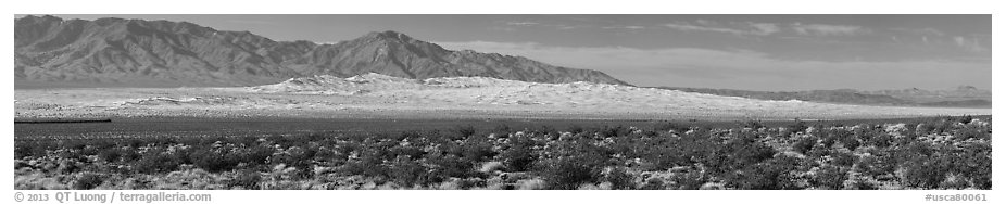 Vast Kelso Sand Dune field. Mojave National Preserve, California, USA (black and white)