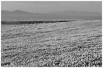 Meadow covered with poppies and Tehachapi Mountains at sunset. Antelope Valley, California, USA (black and white)
