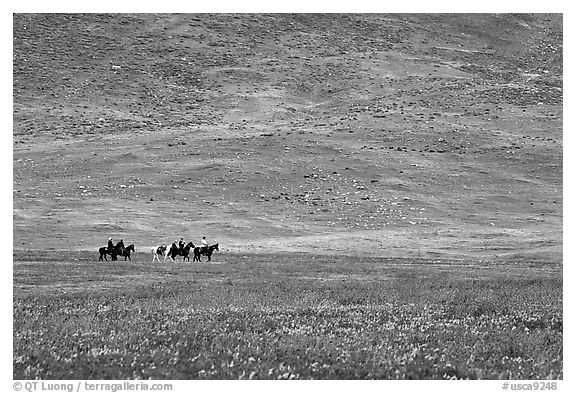 Horseback riders in hills covered with multicolored flowers. Antelope Valley, California, USA (black and white)