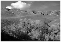 Pond, trees, and Gorman Hills. California, USA (black and white)