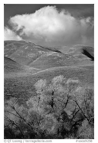 Trees, verdant hills,  Gorman Hills. California, USA (black and white)