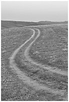 Curvy tire tracks in a wildflower meadow. Antelope Valley, California, USA ( black and white)