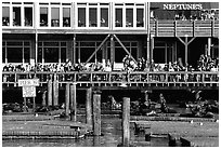 Visitors watching Sea Lions at Pier 39, afternoon. San Francisco, California, USA (black and white)