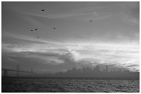 City skyline with sunset clouds and flying seabirds seen from Treasure Island. San Francisco, California, USA (black and white)