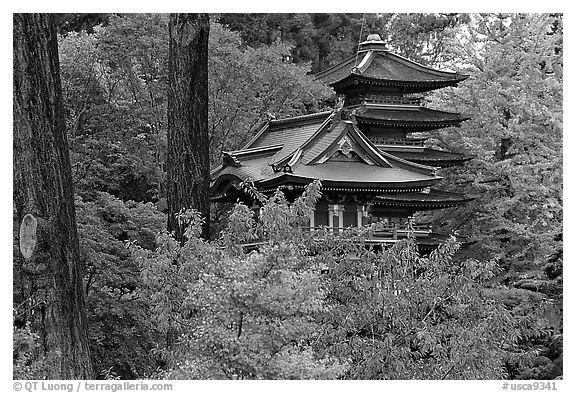 Pagoda amidst trees in fall colors, Japanese Garden, Golden Gate Park. San Francisco, California, USA