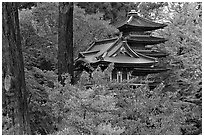 Pagoda amidst trees in fall colors, Japanese Garden, Golden Gate Park. San Francisco, California, USA (black and white)