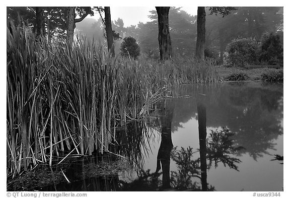 Pond reflections in fog, Golden Gate Park. San Francisco, California, USA