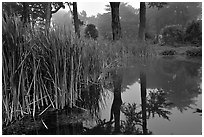 Pond reflections in fog, Golden Gate Park. San Francisco, California, USA ( black and white)