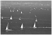 Sailboats in the Bay, seen from Marin. California, USA (black and white)
