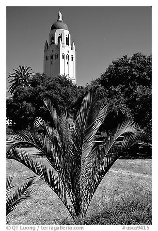 Hoover tower. Stanford University, California, USA (black and white)