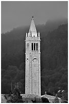 The Campanile, University of California at Berkeley campus. Berkeley, California, USA ( black and white)