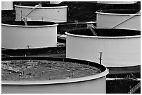 Oil tanks,  ConocoPhillips refinery, Rodeo. San Pablo Bay, California, USA ( black and white)