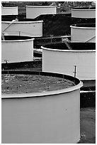 Storage citerns of Oil Refinery near Rodeo. SF Bay area, California, USA ( black and white)