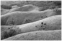 Ridges, Joseph Grant County Park. San Jose, California, USA ( black and white)