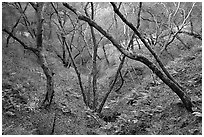 Creek, Sunol Regional Park. California, USA ( black and white)