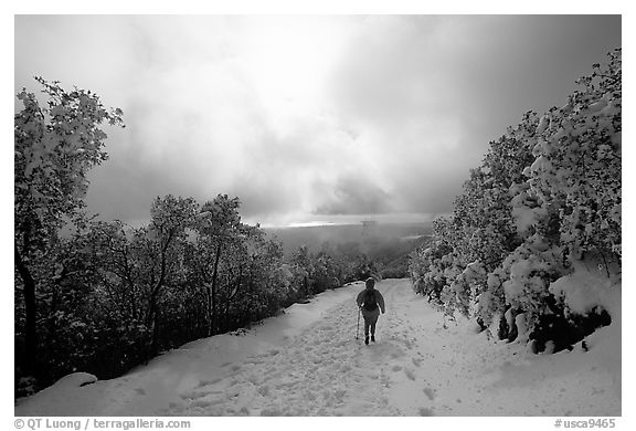 Summit trail after a snow-storm, Mt Diablo State Park. SF Bay area, California, USA