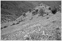 Poppies and ridge, Mt Diablo State Park. California, USA (black and white)