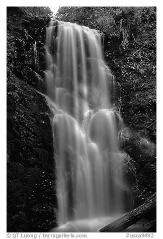 Berry Creek Falls. Big Basin Redwoods State Park,  California, USA (black and white)