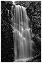 Berry Creek Falls. Big Basin Redwoods State Park,  California, USA ( black and white)