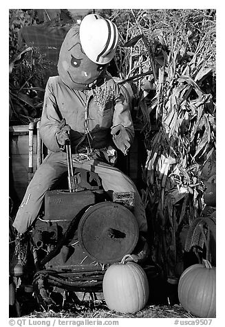 Scarecrow, Pumpkin patch. San Jose, California, USA (black and white)