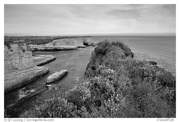 Wildflowers and cliffs, Wilder Ranch State Park, afternoon. California, USA (black and white)