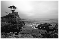 Lone Cypress, sunset, seventeen-mile drive, Pebble Beach. California, USA (black and white)