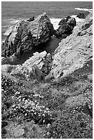 Pinnacle Cove and wildflowers. Point Lobos State Preserve, California, USA ( black and white)