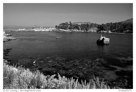 Whalers cove. Point Lobos State Preserve, California, USA (black and white)