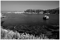 Whalers cove. Point Lobos State Preserve, California, USA ( black and white)