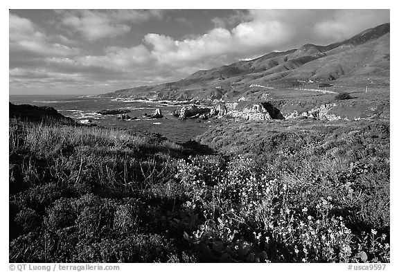 Wildflowers and jagged coast, Garapata State Park. Big Sur, California, USA (black and white)