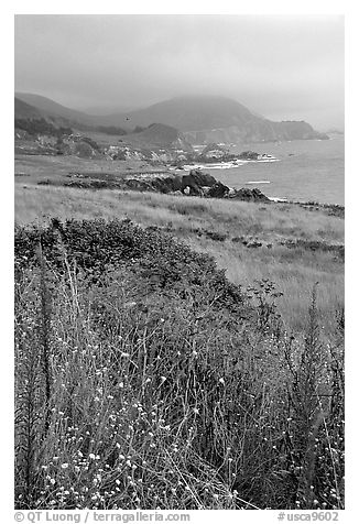 Summer grasses and fog near Rocky Point. Big Sur, California, USA (black and white)