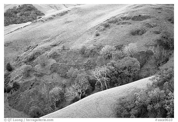 Rolling Hills in spring near San Luis Obispo. California, USA (black and white)