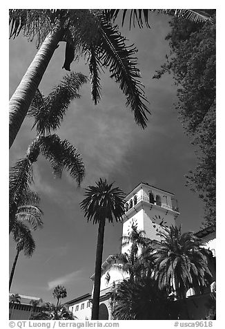 Palm trees and  courthouse. Santa Barbara, California, USA (black and white)