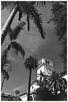 Palm trees and  courthouse. Santa Barbara, California, USA ( black and white)